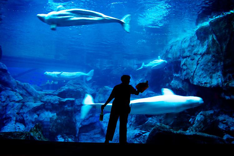 atlanta acuario