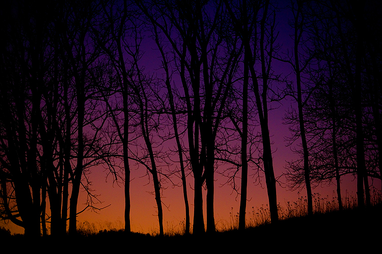 Silhouette of Trees : Undisclosed Location : Virginia USA